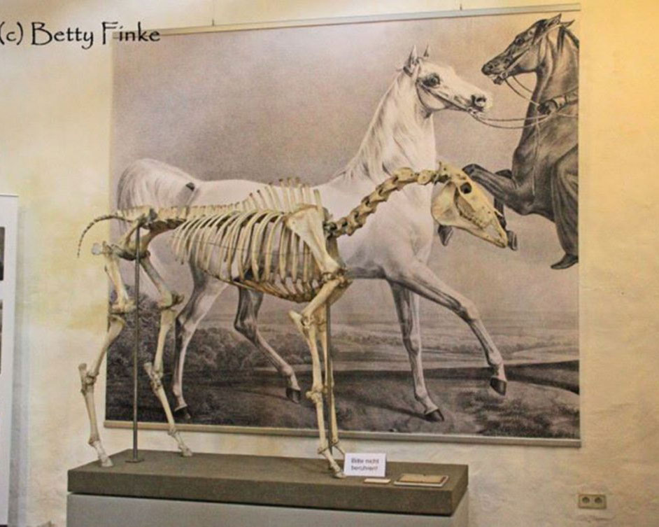 200 Years of Weil-Marbach Arabians, A Royal Heritage of Timeless Beauty