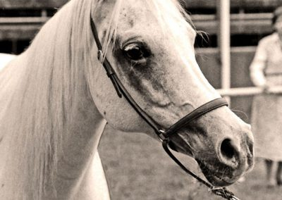 1980 European Champion Mare Katun, whose true identity was never established.