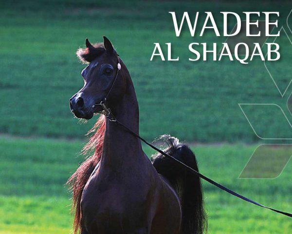 Wadee Al Shaqab