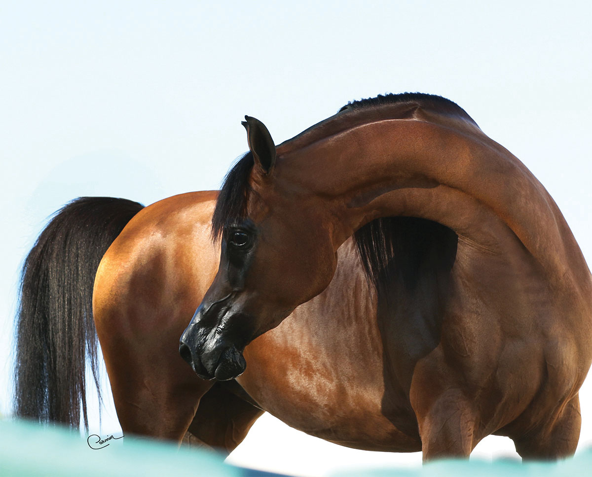 A Look Back at the Reigning U.S. National Champion Purebred Mares