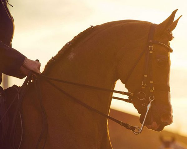 2017 Sport Horse Nationals Leading Sires