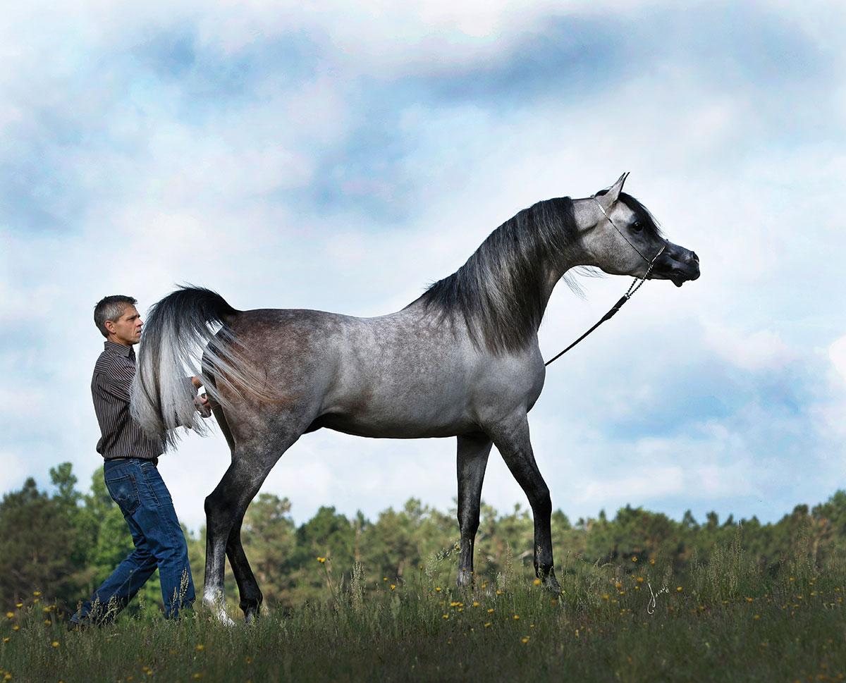 Exxalt — A Breeder's Vision