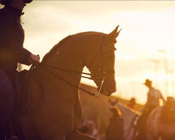 2018 Scottsdale Arabian Horse Show Full Results