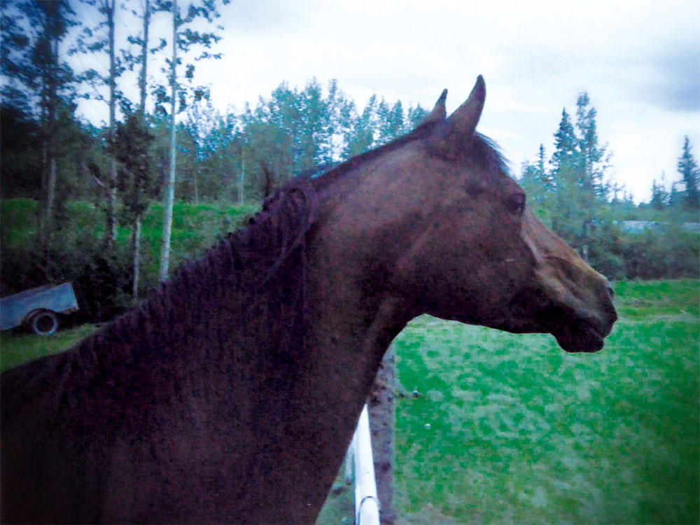 Another Horse-crazy Girl Story