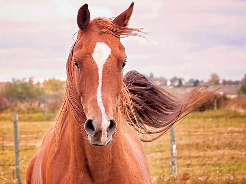 Psst … Wanna Buy a Horse?