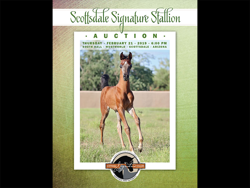 2019 Scottsdale Signature Stallion Auction Catalog