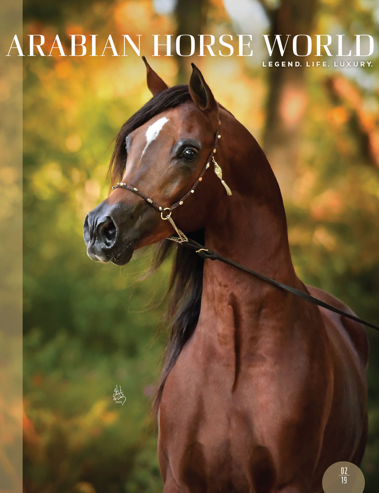 Current Issue | Arabian Horse World - photo#41