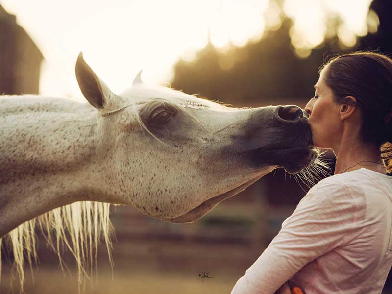 The Bond We Share With Our Arabian Horses