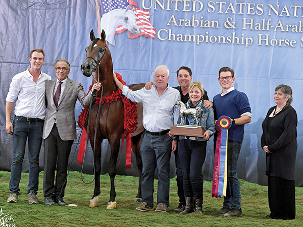 2017 Sport Horse National Show Results Arabian Horse World