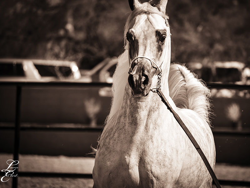 2019 Scottsdale: The Halter Divisions