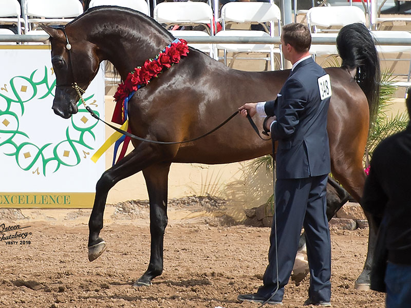 2019 Scottsdale Arabian Horse Show Full Results
