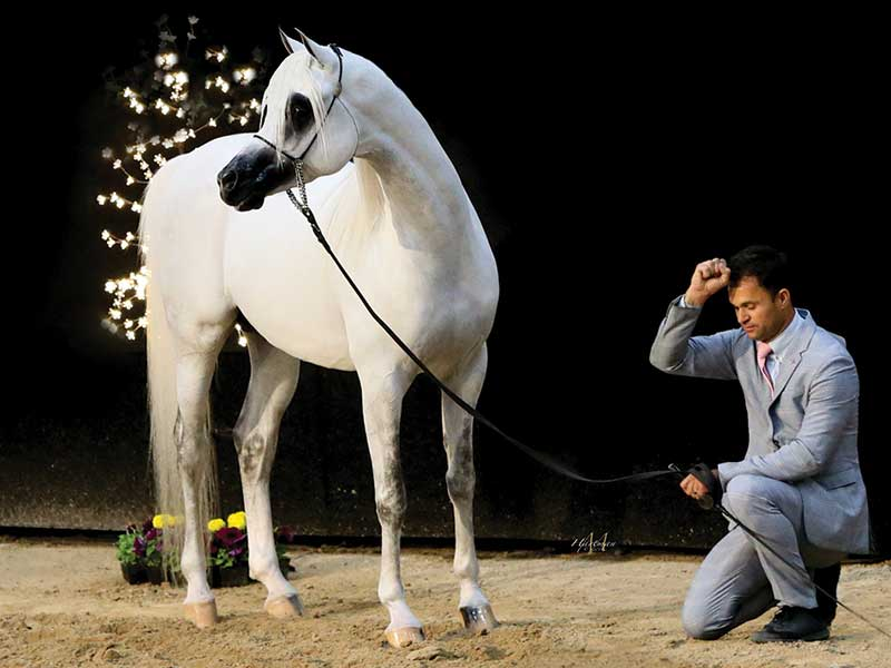 Home Arabian Horse World