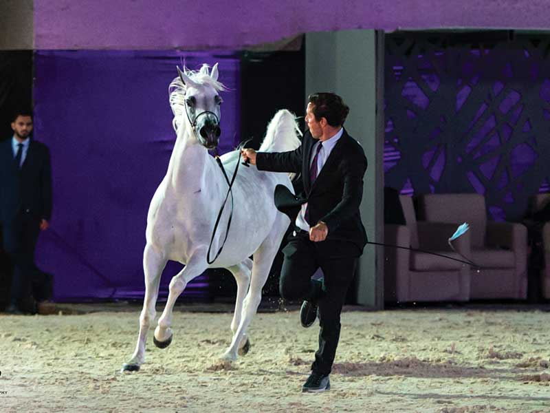 2nd Annual Asharqia Arabian Horse Festival 2019