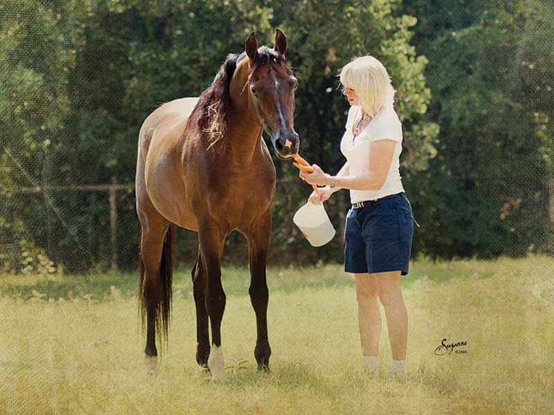 My Life with the Arabian Horse: Shawn Crews