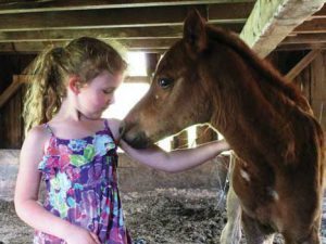 Arabian Horse World's Annual Collection of Baby Photos