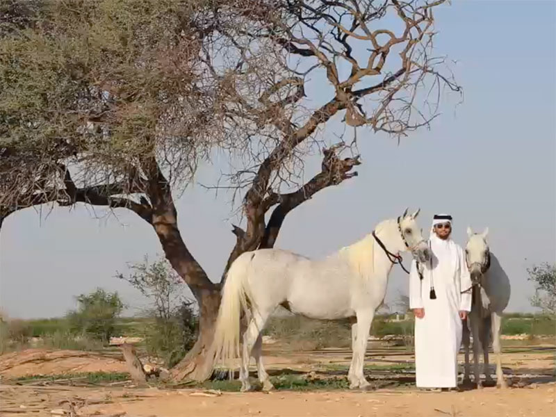 The Story of Al Waab Farm with Sheikh Ahmed Abdulla KH H Al Thani