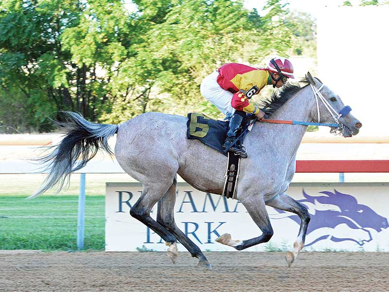 RoseBrook Tops Texas Arabian Races