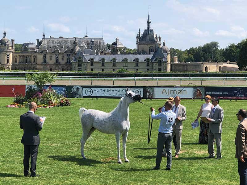 Fairytale Castle and Arabian Horses