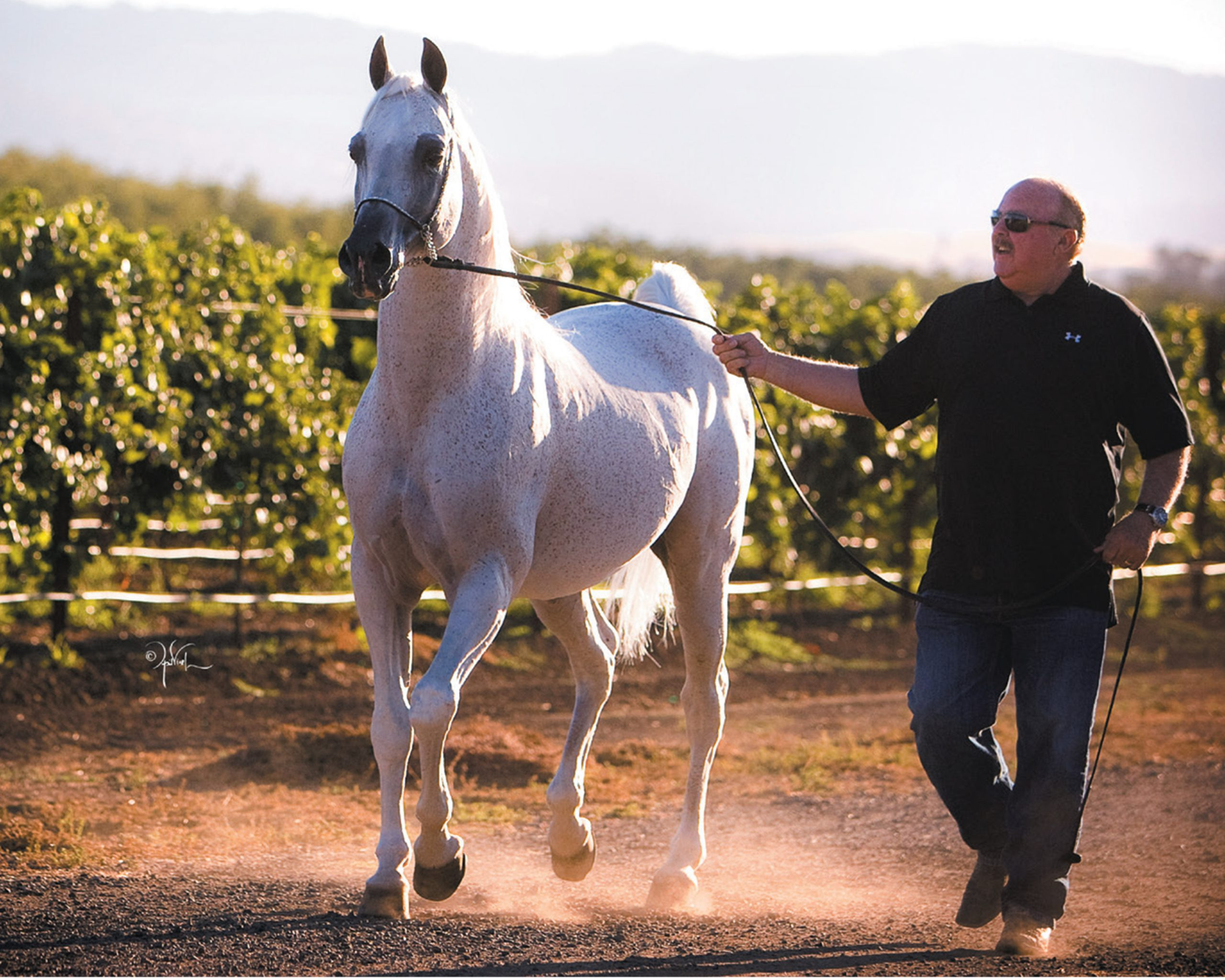 My Life with the Arabian Horse: Manny Vierra