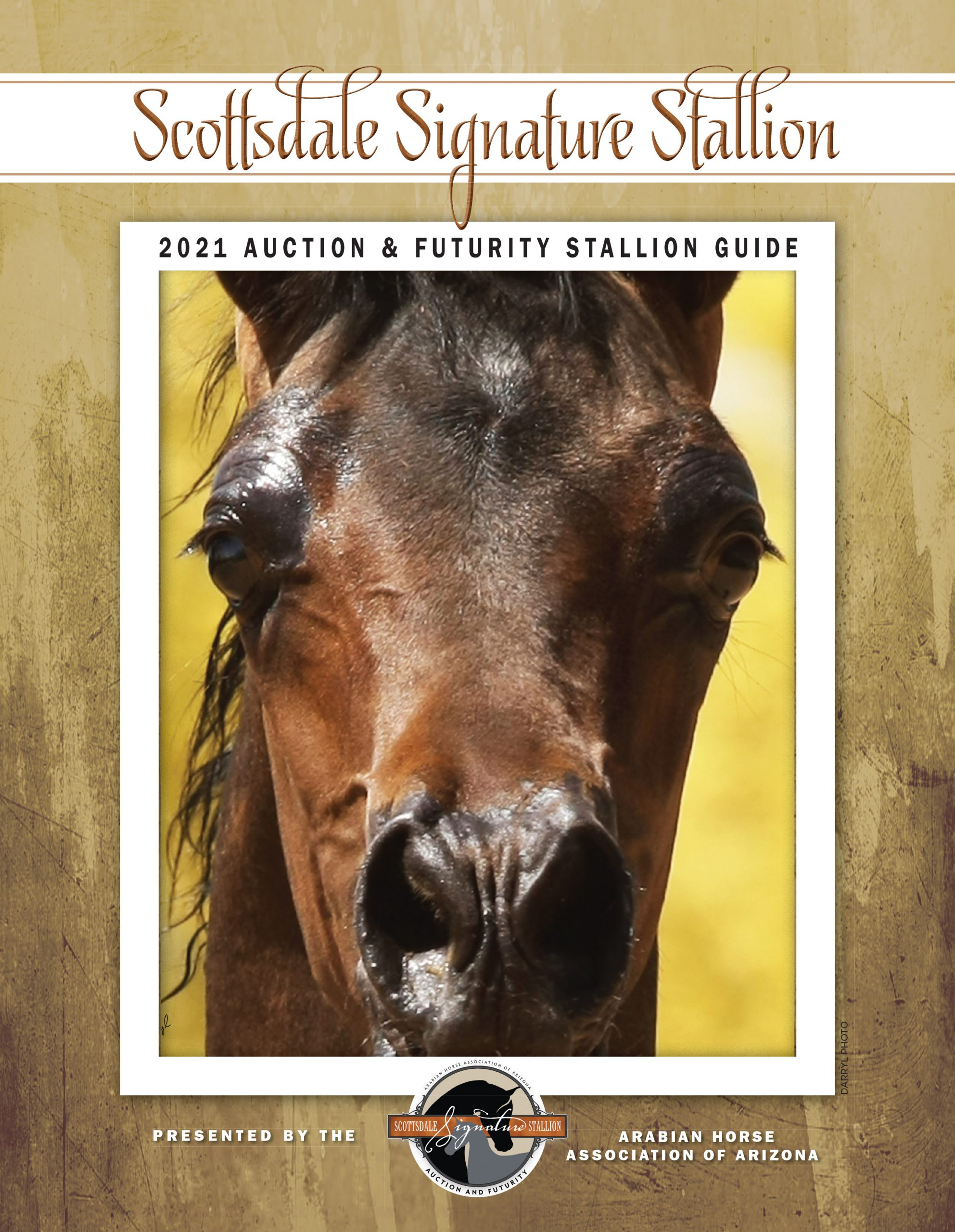 2021 Scottsdale Signature Stallion Brochure