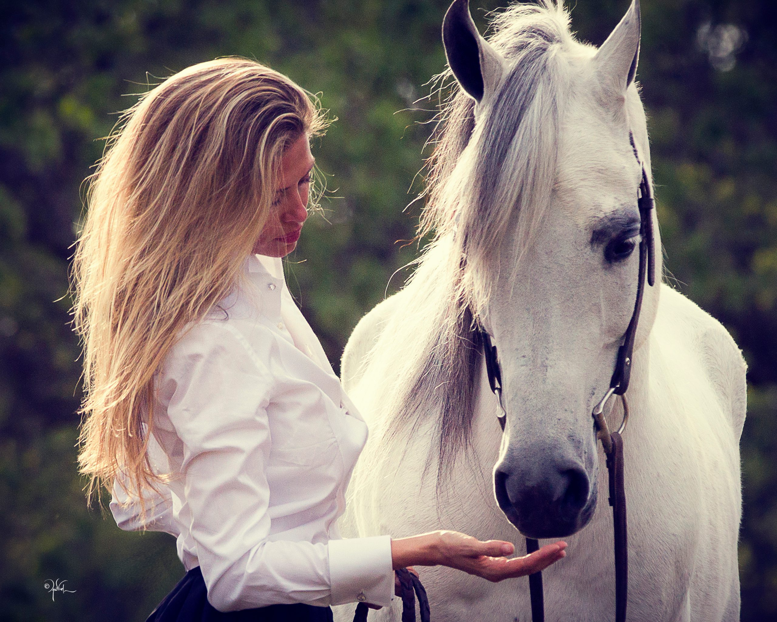 Mindy Peters Arabians - The Payoff of Persistence